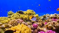 A Coral Reef in the Red Sea near Egypt