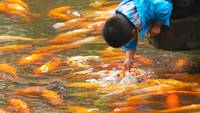 Boy Petting Koi Fish, China