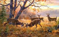 Deer Herd In The Forest