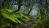 Forest Path in Padley Gorge, Derbyshire, England
