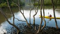 Man Canoes in Marramarra Creek, Australia