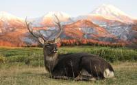 Male Deer Rests Enjoys Mountain View