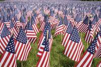 Memorial Day Flags By The Gravestones