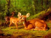 Mother Deer and Fawn Mother Love