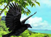 Alala, Hawaiian Crow