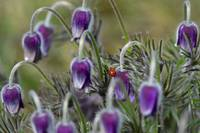 Lady Bug And Purple Flowers