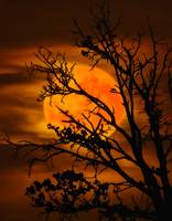 Orange Moon Tree Silhouette