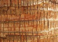 Abstract Nature Palm Tree Bark 704 Orange