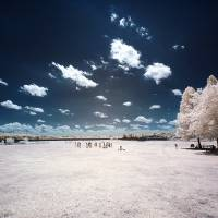 Infrared Park Art Prints & Posters by LD Franklin