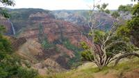 Waimea Canyon and Tree