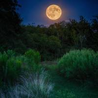 September Corn Moon Art Prints & Posters by Jim Crotty