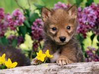 Baby Bear Cub In A Flower Garden