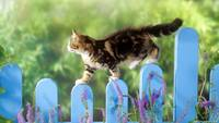 Kitten Crosses The Picket Fence