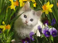 White Kitten In The Flower Garden
