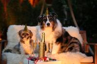 Two Dogs Celebrating New Year's Together
