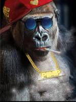 Mr. Gorilla the  Pimp