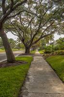 The Live Oaks of Venice Avenue