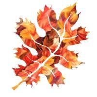 Fall Oak Leaf Watercolor Silhouette Art Prints & Posters by Irina Sztukowski