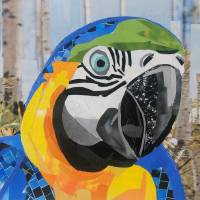 The Colorful Parrot Art Prints & Posters by Megan Coyle