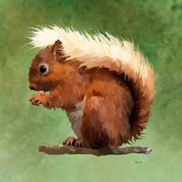 Scruffy Red Squirrel