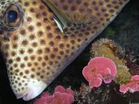 boxfish_eyes