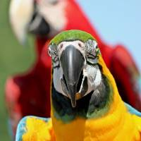 Parrot Photobombing Art Prints & Posters by Through The Split Window