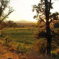 Redding Sunrise - PA012340 by Richard Thomas