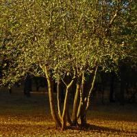 Oak Tree and Sunrise - PA022349 by Richard Thomas