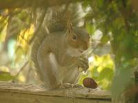 squirrel (28)