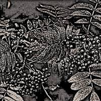 Abstract Autumn Berries In Black And White