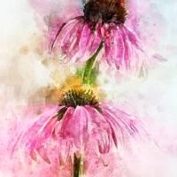 Echinacea Water Splash Art Prints & Posters by Ann Garrett