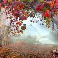 Autumnal Still Art Prints & Posters by Igor Zenin
