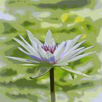 Serene Water Lily Art Prints & Posters by Carol Groenen