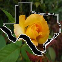 Yellow Rose of Texas with Texas