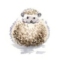 Hedgehog 2 Art Prints & Posters by David Rogers