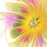 Golden Blossom Art Prints & Posters by Deborah Benoit