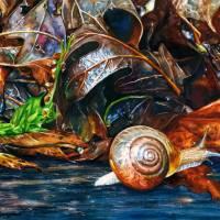 A Snail's Pace Art Prints & Posters by Kelly Eddington