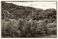 Wooded mountain foothills - dark sepia