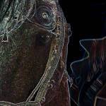 """Equus Elegance"" by JMcQ"