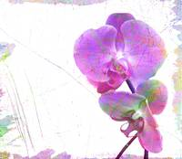 psychedelic orchids