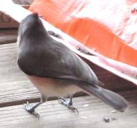 titmouse hunting more seeds