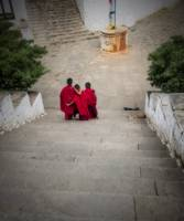 Young Monk Friends, Paro, Bhutan