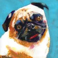 Pug Blueboy Light Blue