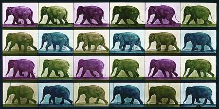 Time Lapse Motion Study Elephant Color