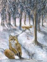 Red foxes in wintery woods