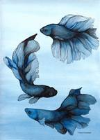 betta_blueblack_full