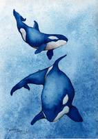 orcas_two_prussian_blue
