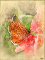 Butterfly in Watercolor