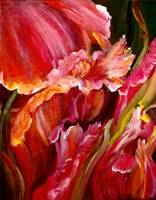 Tulip Infusion