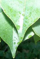 very close view of a green leaf dewdrops
